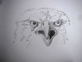 grumpy eagle by chrisravensar