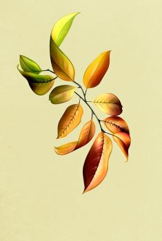 Leaves by JeremyYoung