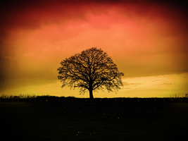 Loneliness by rhb4