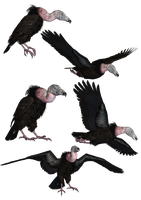 Vultures PNG Stock by Jumpfer-Stock