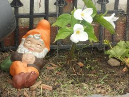 Gnome Home by canamerica88