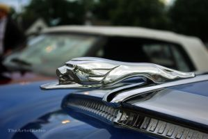 Monarch Hood Ornament by amosis55