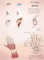 Hands Guide - Bones - Pt.1 by frijda