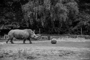 Rhinoceros by VicDeS-P