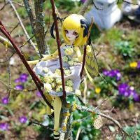 [ Enaibi doll ] Wasp Ethel aka Honey Drew by Atelier-Cynamon