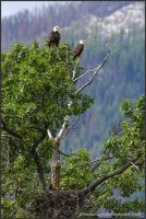 Eagle's Nest Lookout by kootenayphotos