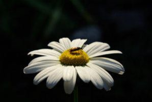 Bugs Scene by Insect-Lovers-Club