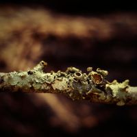Woods, Parasites and Bokeh by Madhorse5