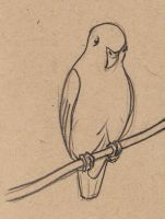 Sketching in the zoo: Parrot by Velouriah