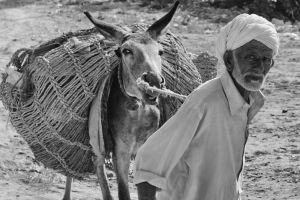 Old Man and the Donkey... by aam1r-javed