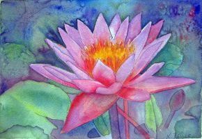 Waterlily 2 by karincharlotte