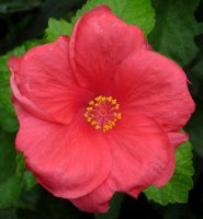 276 - flower by WolfC-Stock