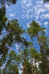 Blues sky in the forest by close101