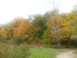 Thanksgiving - Erindale Park by ZaeLynn