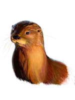 Otter by Joava