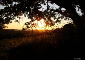 Fairys View Of The Sunset by Estruda