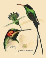Humming Birds by EgsarDesigns