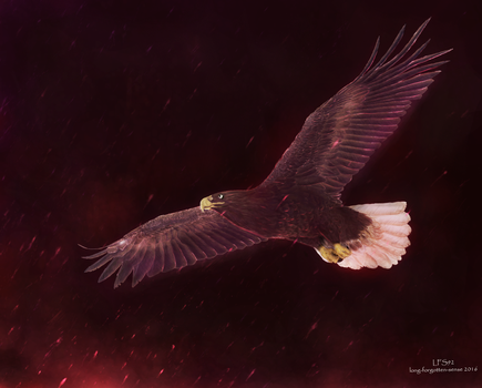 Feral Courage [Digital painting] by LFS92