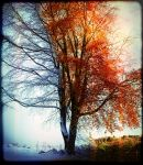Tree Above Minnowburn: Seasons by Gerard1972