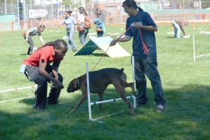 2014 Dog Festival, Try It Dog Obstacles 10 by Miss-Tbones