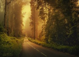 Driving this road down to Paradise by Miguel-Santos