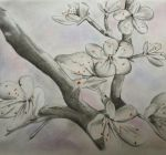 Flowers: Pencil by Msdirection
