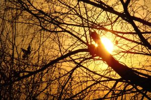 Sun behind a tree by megymaca
