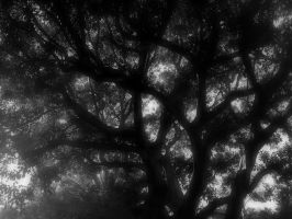 Beverly Hills Tree 1 by GeneLythgow