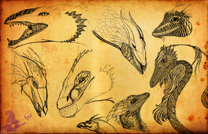 Dragon Sketches by Gryphonia