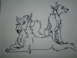Nocta and Evelent Commission Lines by Niyra