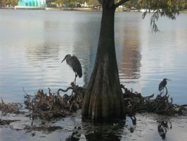 Lake Eola [4] by vanazza