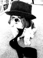 Mafia Dog 1: I Am a Mafia Dog by Countess-Granola