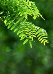 Green leaves STOCK by AStoKo