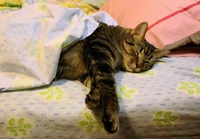 All Tucked In by juliekswenson