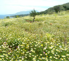 Flower field pano stock by LylicaGalatea