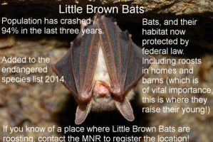 Canadian Bat populations are not in good shape. by Kajm