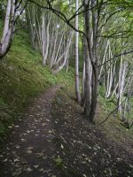 Forest Path by mindCollision-stock