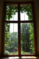 green window by mimose-stock