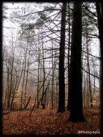 Foggy Forest by JukeboxBaby