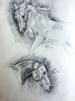 Horse sketches by Annabellx