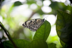 Toronto Zoo: Butterfly by veWoz