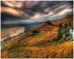 Swiss Lavaux - Autumn by superjuju29