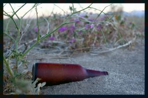 Beer Bottle In Bloom by shutterbugmom