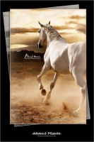 Cover of a magazine for Arabian horses by Ahmed-Matrix