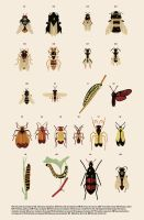 European Insects by anatotitan