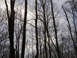 Dark Trees Grey Sky by Angel-of-Isis