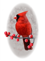Winter Cardinal by ArtofJefferyHebert