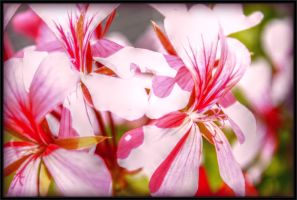 Pink Flowers by DanielHauck