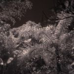 Infrared Canopy by sciph