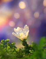 hope in the air by Olivie-Marchal